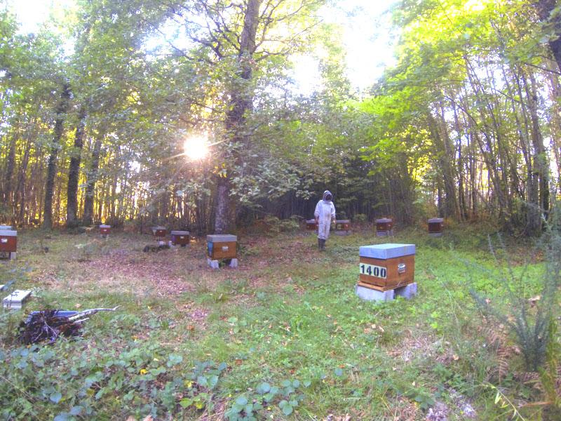 Derniers rayons de soleil au rucher